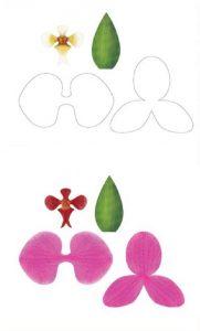 шаблон орхидеи