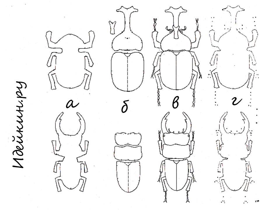2 Схема для жуков