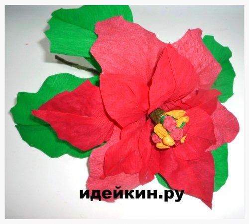 Пуансетия или рождественская звезда из гофрированной бумаги